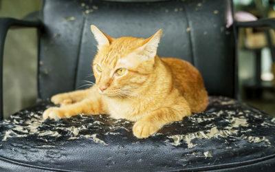 Guide för att reparera kattklösmärken